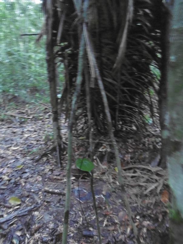 Manaus 10 Regenschutz