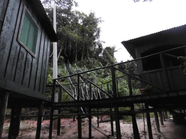 Manaus 7 in den Regenwald