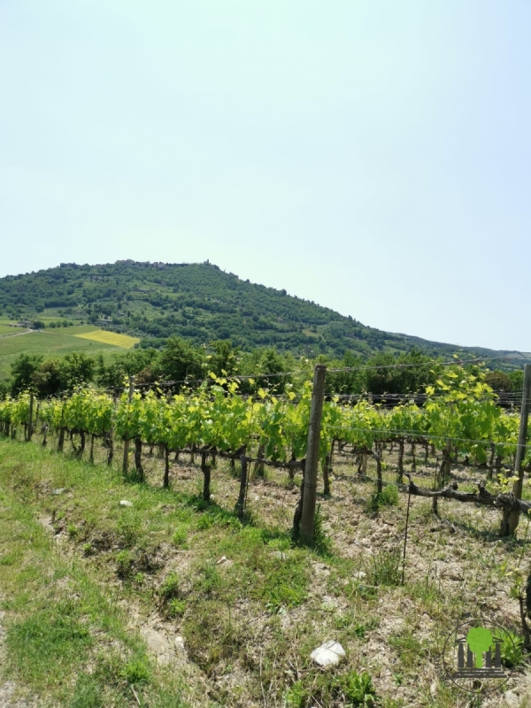 Weingut Baricci