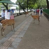 ein Park voller Hirsche